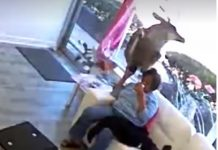 deer-crashes-through-the-window-of-a-hair-salon